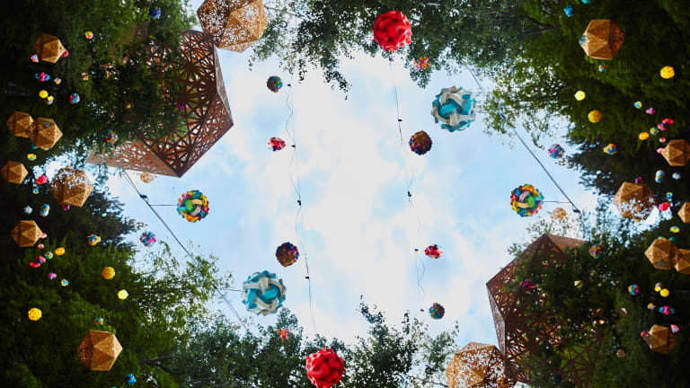 The Electric Forest Picture Book