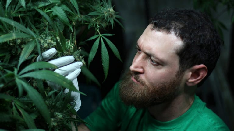 Weedsday Playlist: AlpinStash Guru of Ganja Danny Sloat Shares 5 Songs for Your Next Sesh