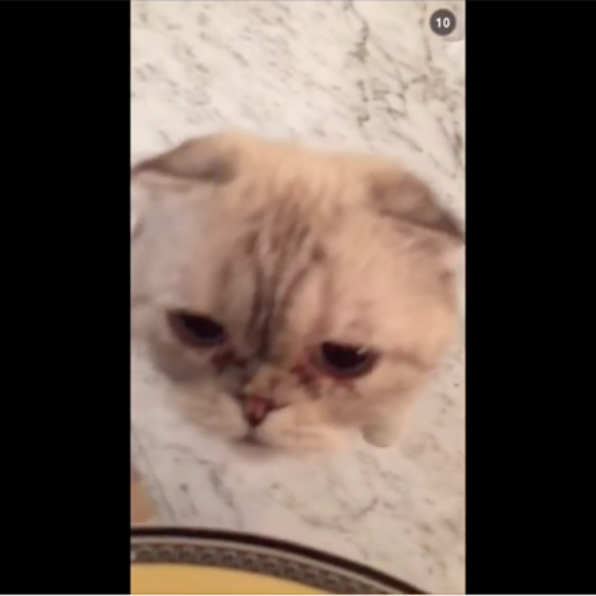 Watch Calvin Harris Quits Day Job Becomes Taylor Swift S Cat Sitter Magnetic Magazine