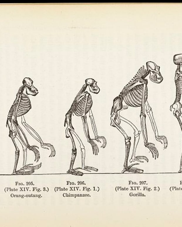 Illustration: 'The Evolution of Man' (via Wellcome Images)