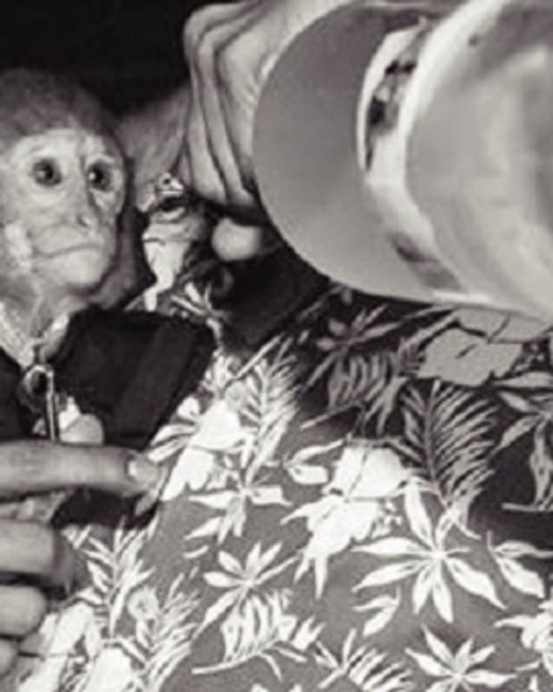 EDM News: Photos Of A 'Vodka Drinking' Monkey Put Dubai Nightclub In Hot Water