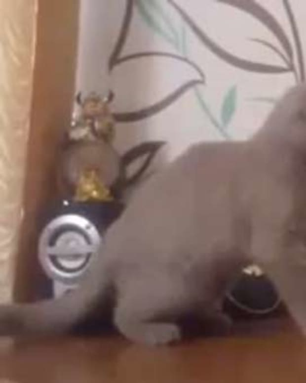 Watch This Cat Dance To Dubstep