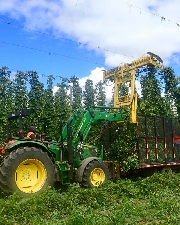 Crosby Farms - Fresh Hops Harvest