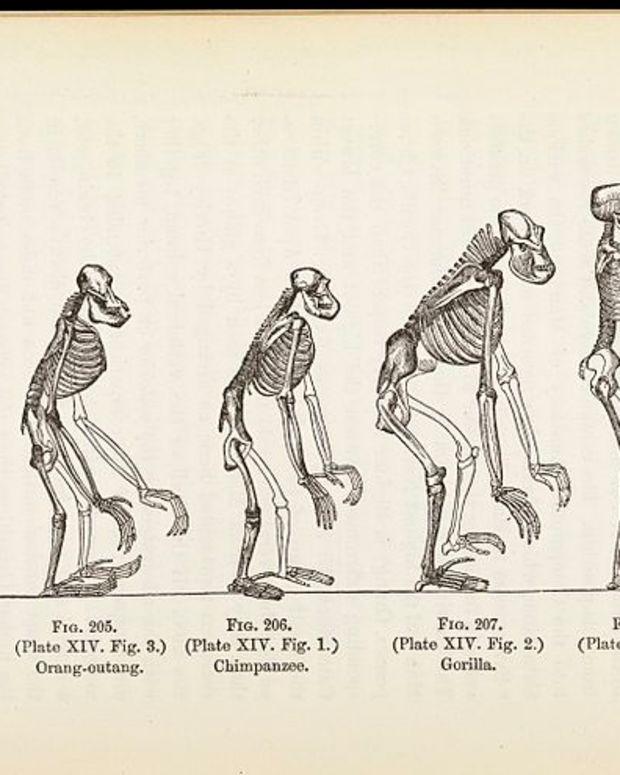 Illustration: 'The Evolution of Man' (via Wellcome Images)