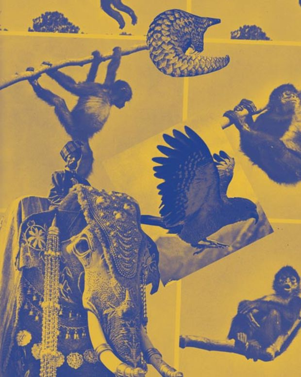 "Review: Mugwump ""Boutade"" via International Feel—File Under Essential Techno"