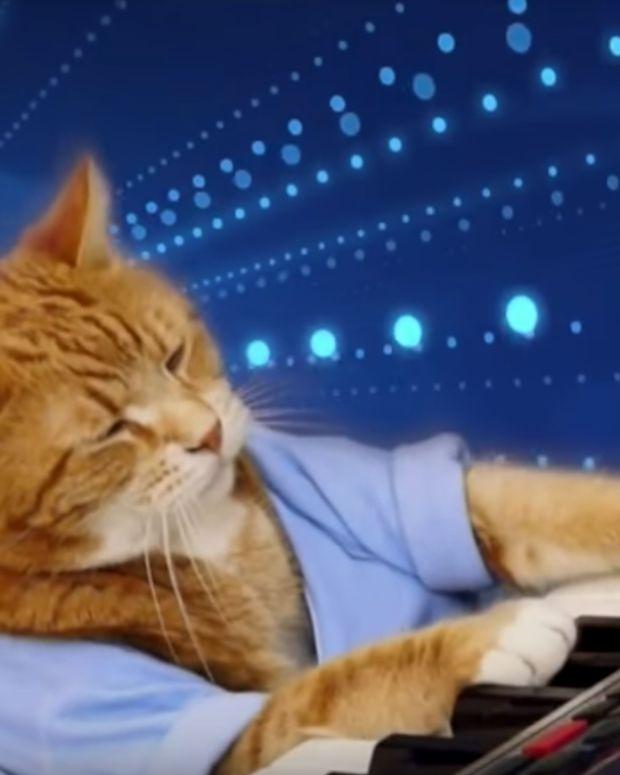 Bento Keyboard Cat