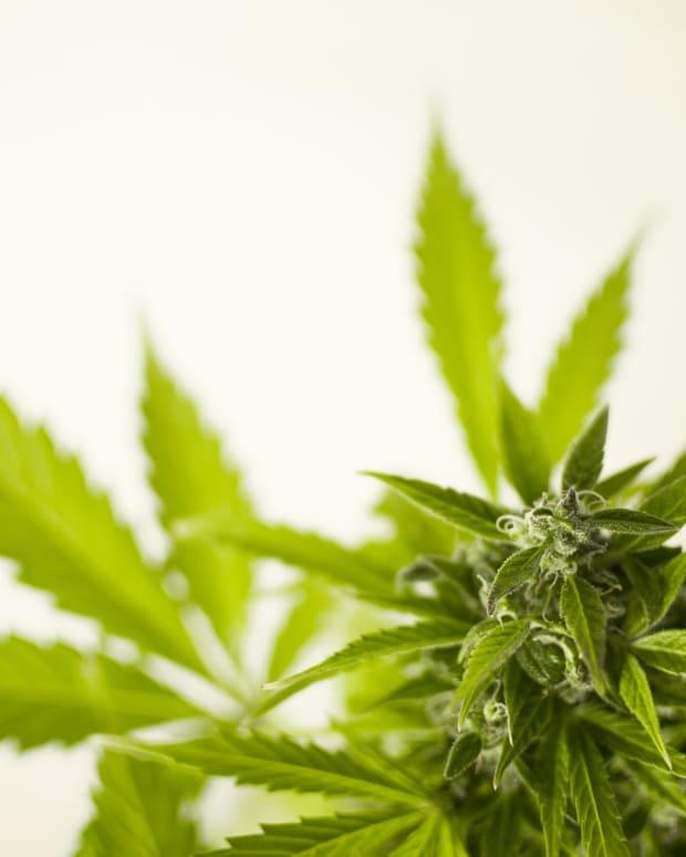 marijuana-3065612_1280