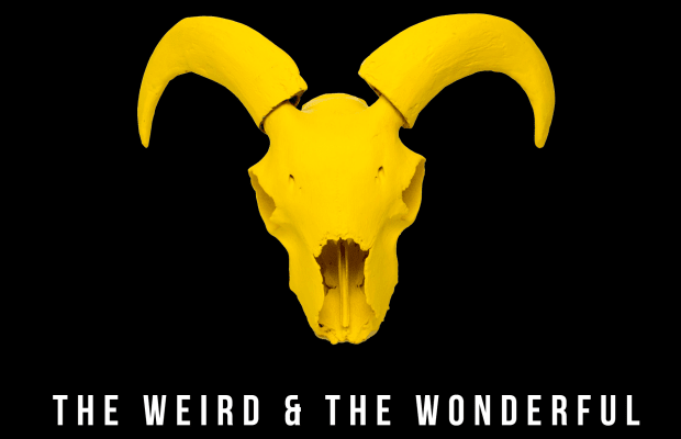 Industry Insider: Management Company The Weird and The Wonderful Keep Their Love of Music at the Center of Their Focus
