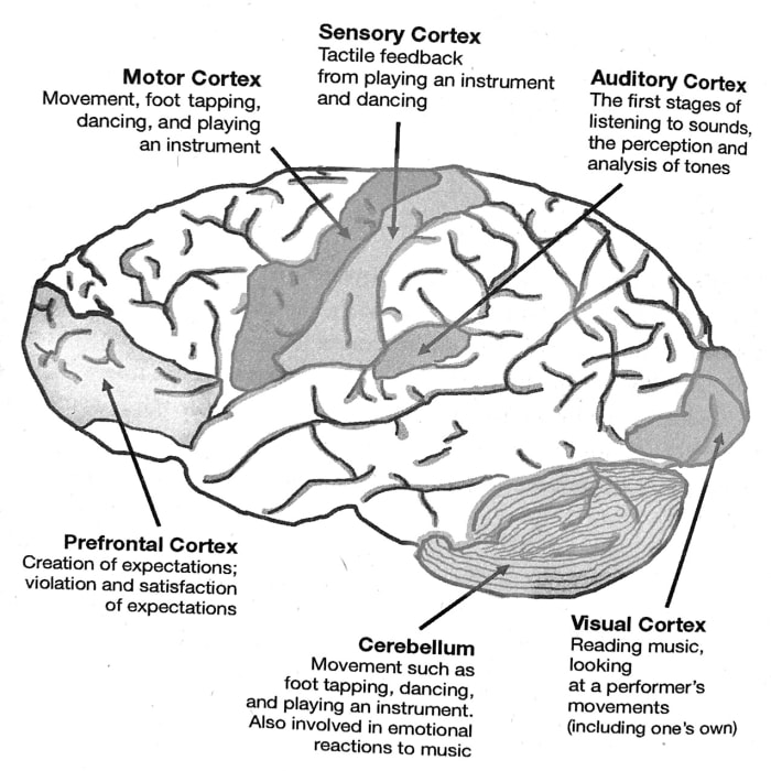"This Is Your Brain On Music: The Science of A Human Obsession"","