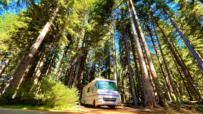 Mira The RV in the Forest