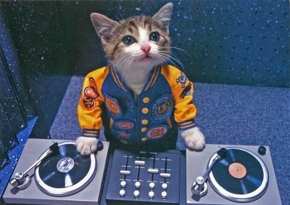 dj-kitty-main