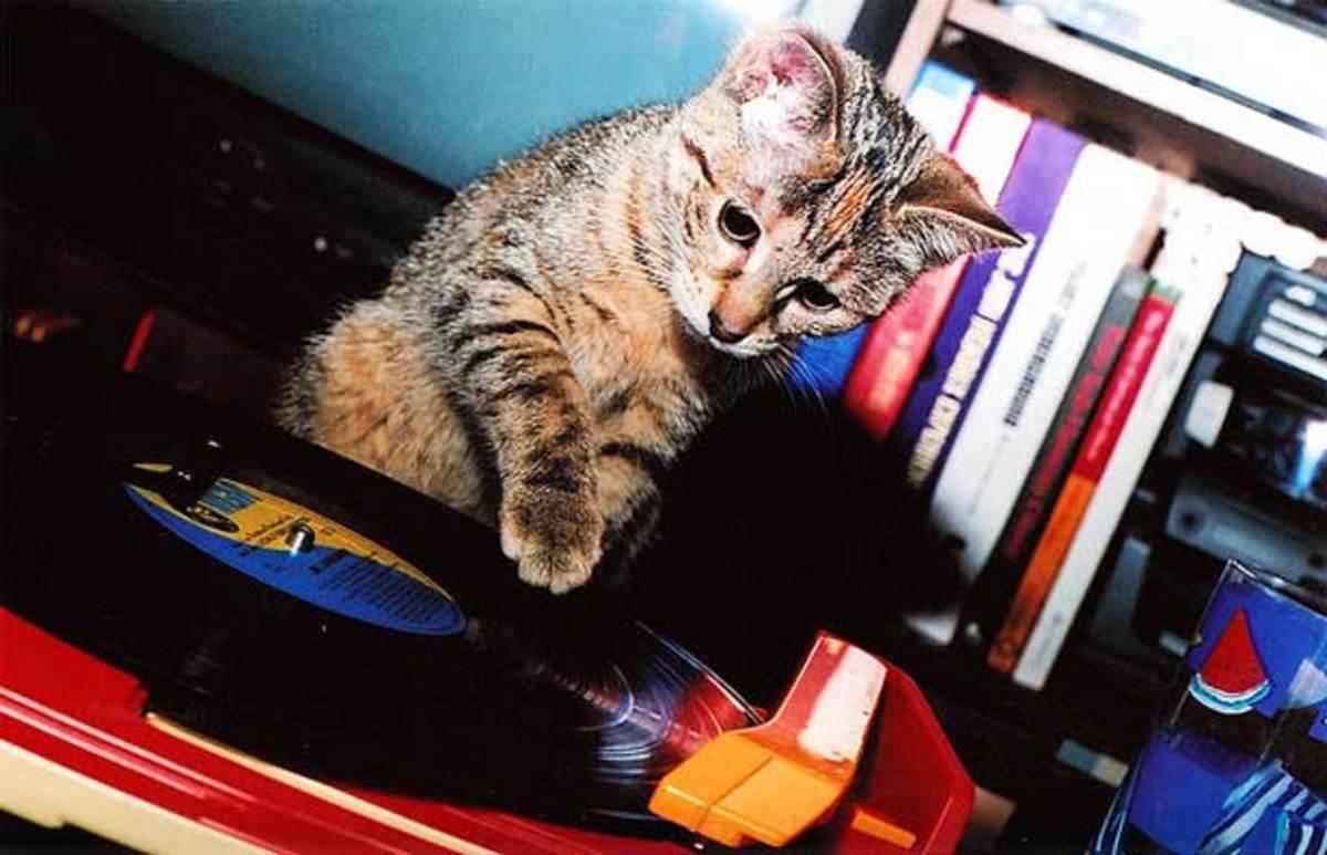 cat-scratch