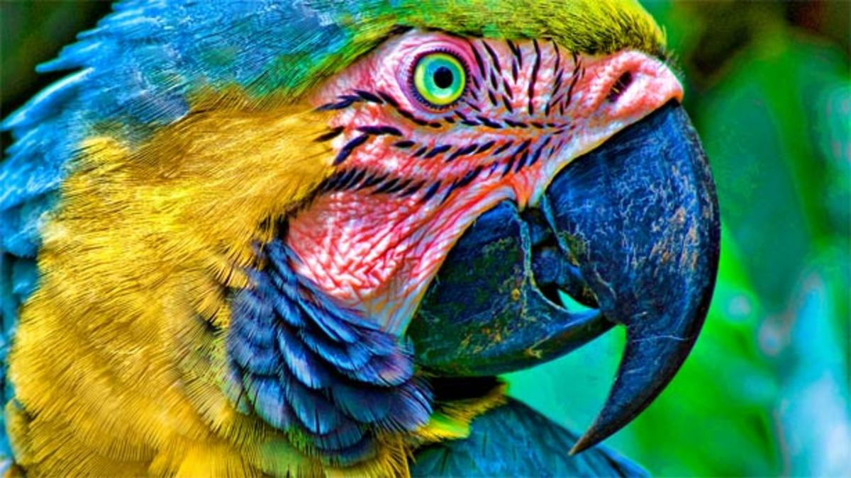 Parrots Hate EDM—Especially Prodigy and Chemical Brothers