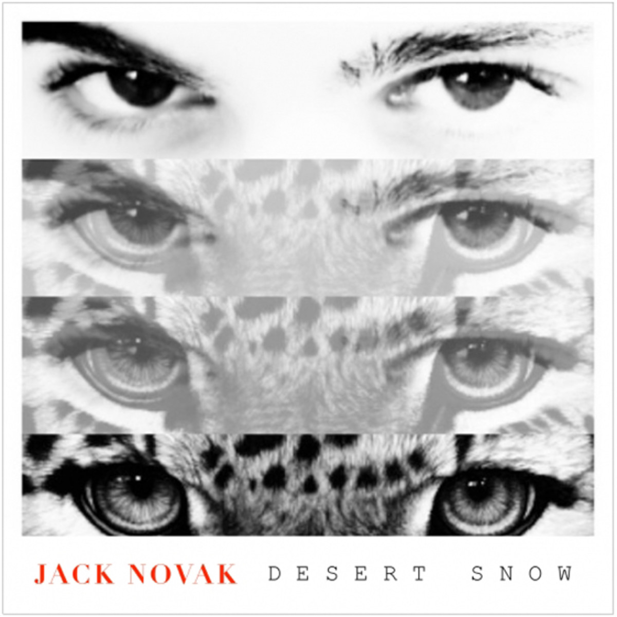 EDM Download: Jack Novak Releases New Single 'Desert Snow,' File Under Festival Bangers
