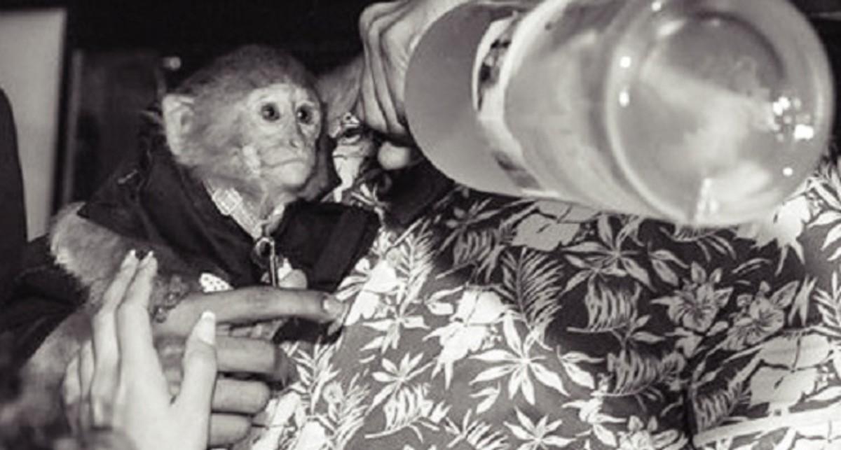 EDM News: Photos Of A 'Vodka Drinking' Monkey Put Dubai Nightclub In Hot Water