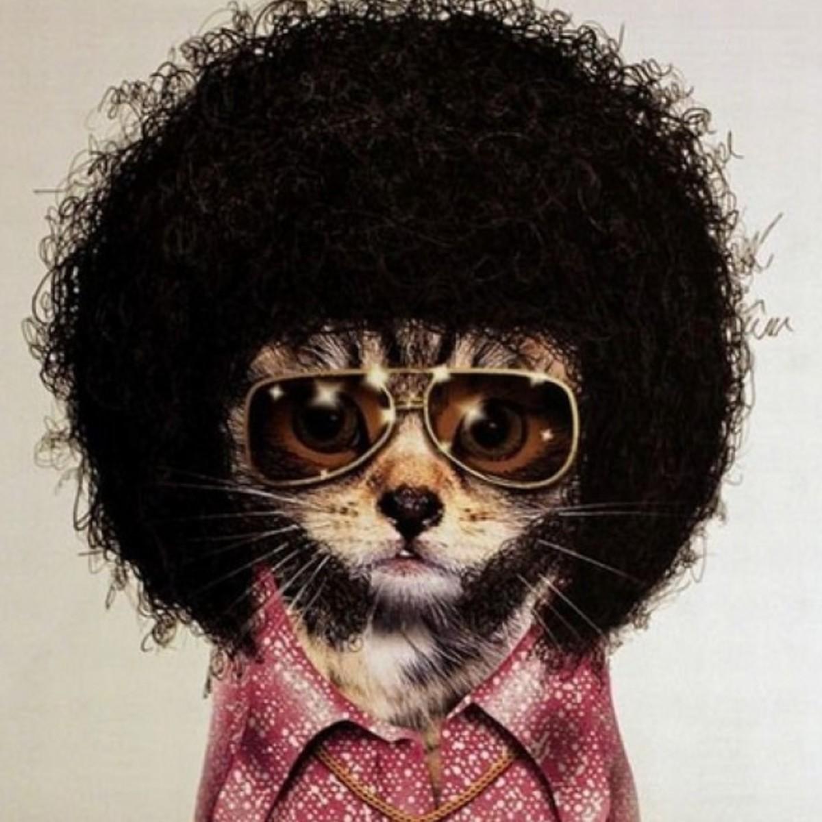 disco.cat