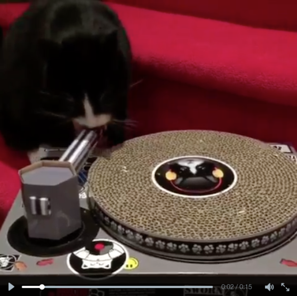 Watch Meowingtons DJ (Results Are Next Level)