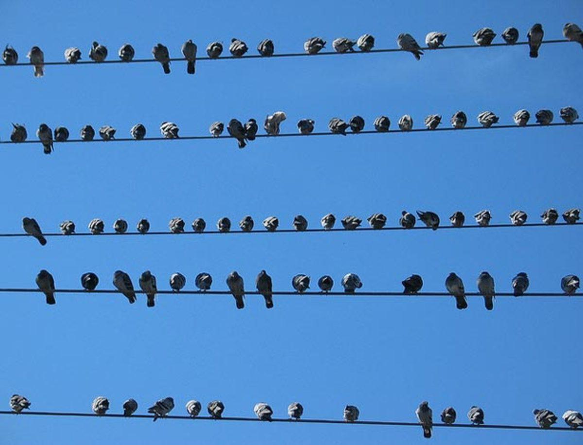 birds.wire