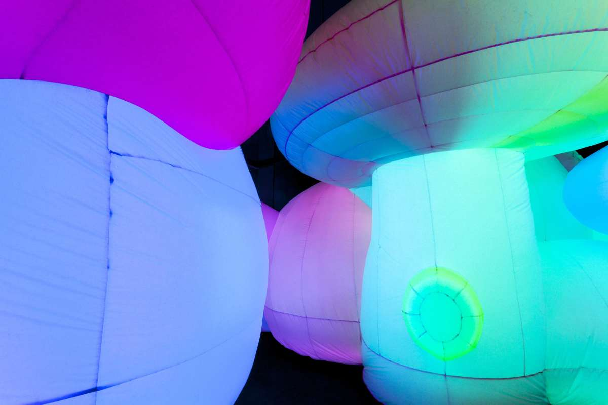 Images courtesy of the Oakland Museum of California