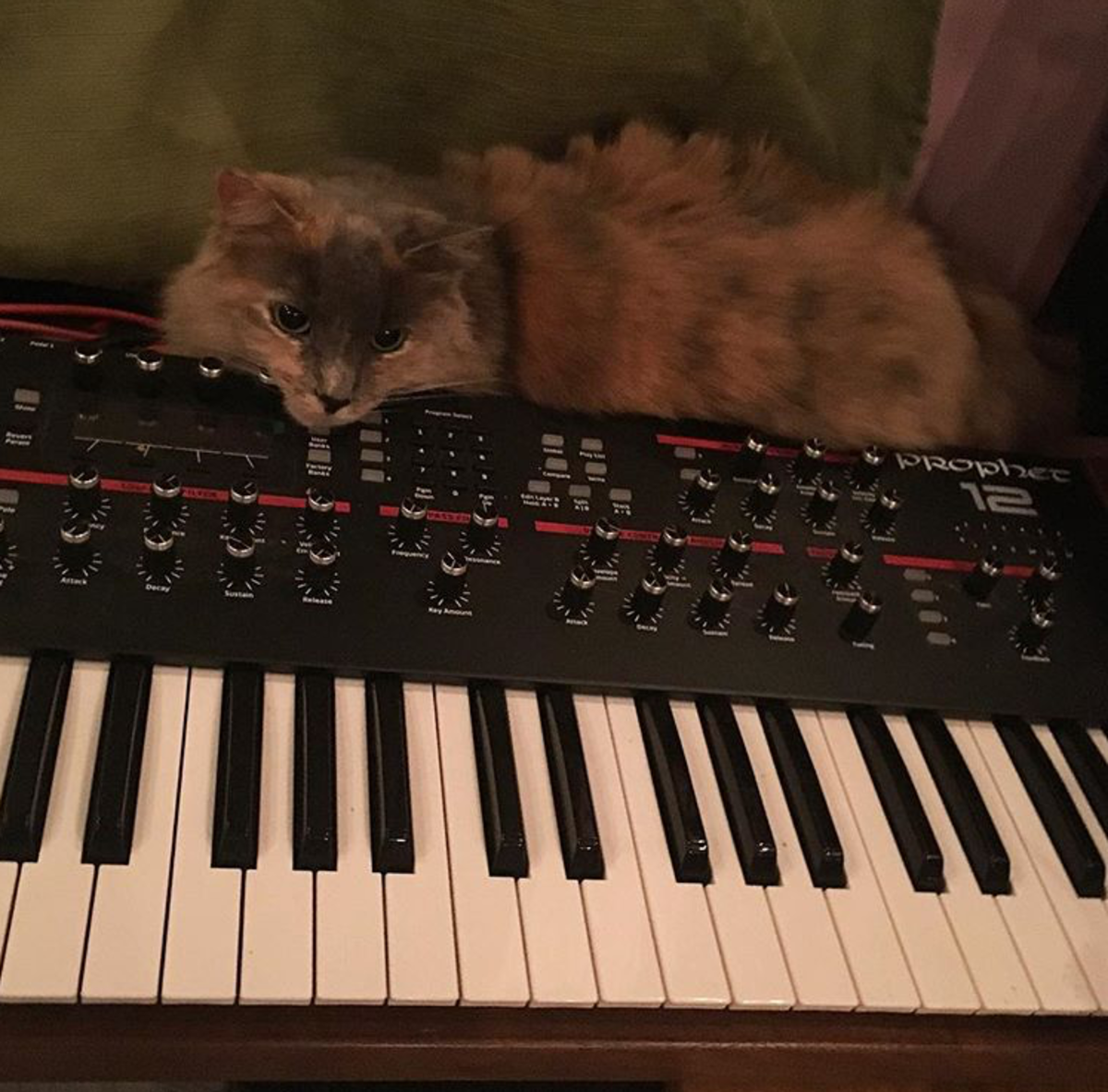 Prophet 12 With Wendy Cat