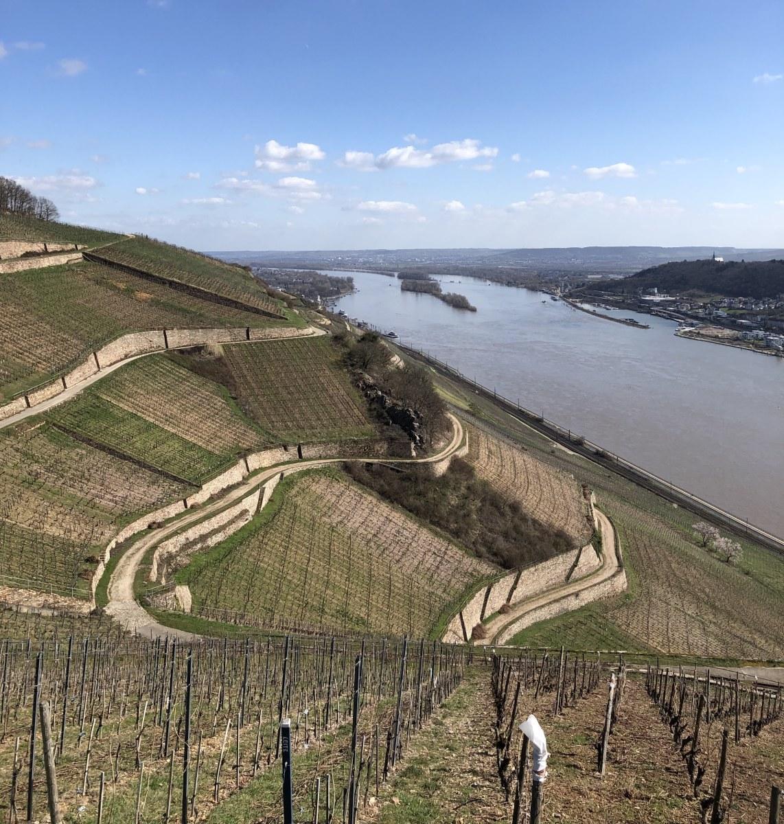 C-Vogt-Rheingau