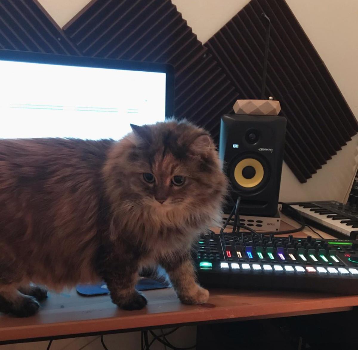 ambient kitty qrtr cat studio