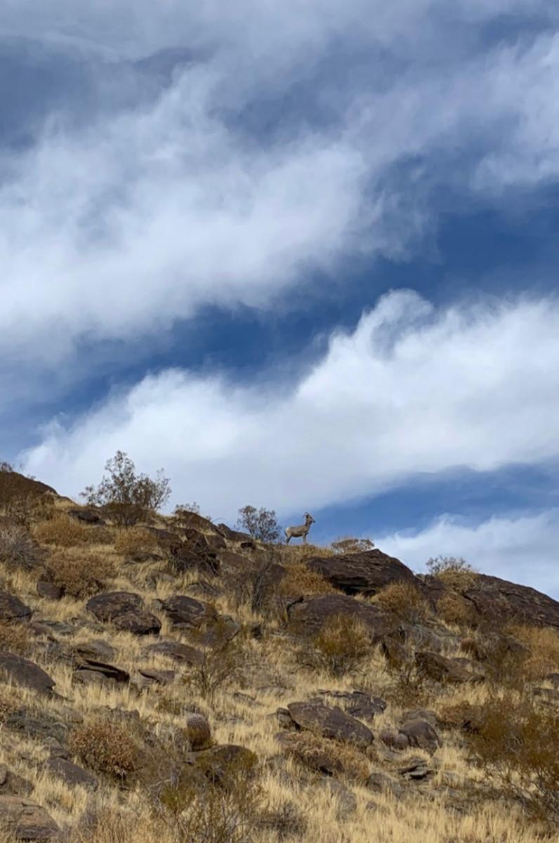 Ramon Road Hike to South Lykken Trail