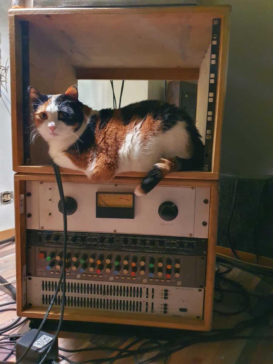 Cubicolor CAT