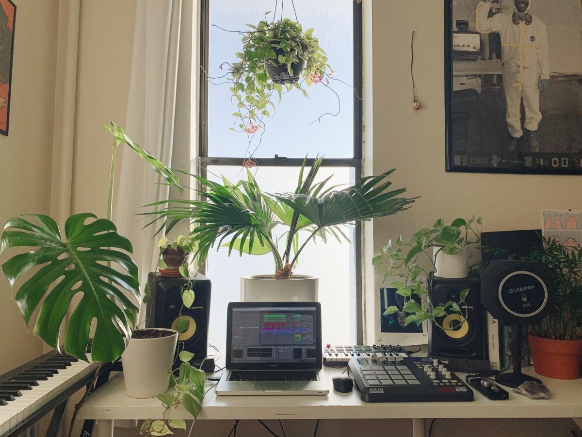 Past Palms Studio